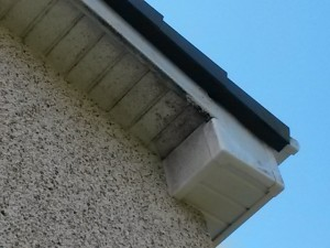 UPVC Gutters, Fascias and Down Spouts revived.